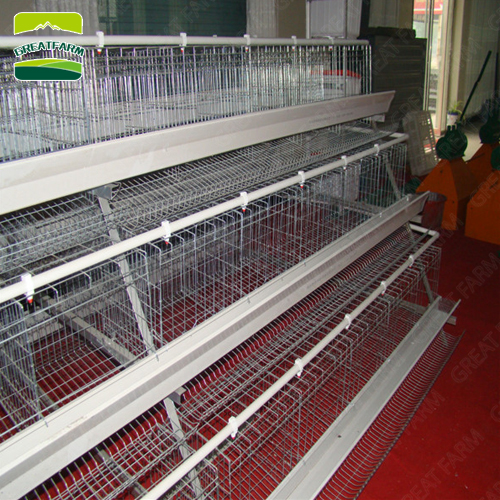 New style 45 days chicken cage