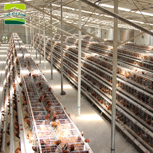 New design H type professional layer egg chicken cage chicken poultry cage automatic chicken cage for farms