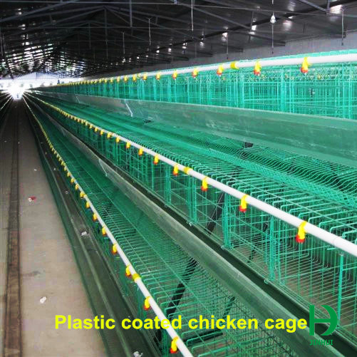cage for chicken