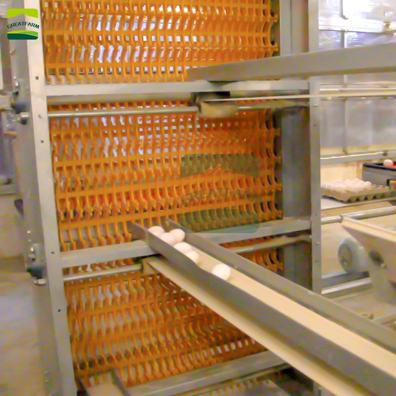 GREAT FARM chicken egg collection system chicken egg collecting system birds egg collection