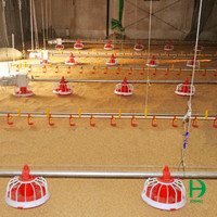 automatic chicken feeding system