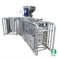 automatic feeder for sow