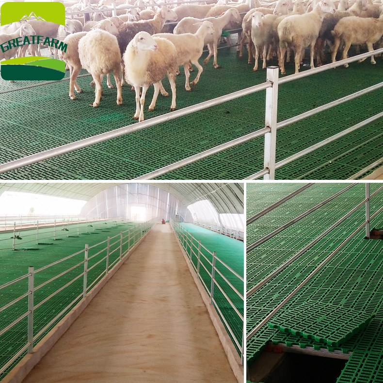 GREAT FARM 60*60cm sheep slat floor sheep flooring mesh customized plastic floor for goat poultry