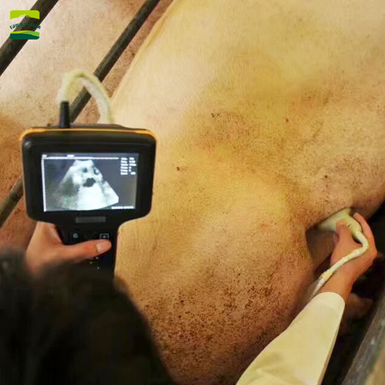 Veterinary Ultrasound Machine for pig